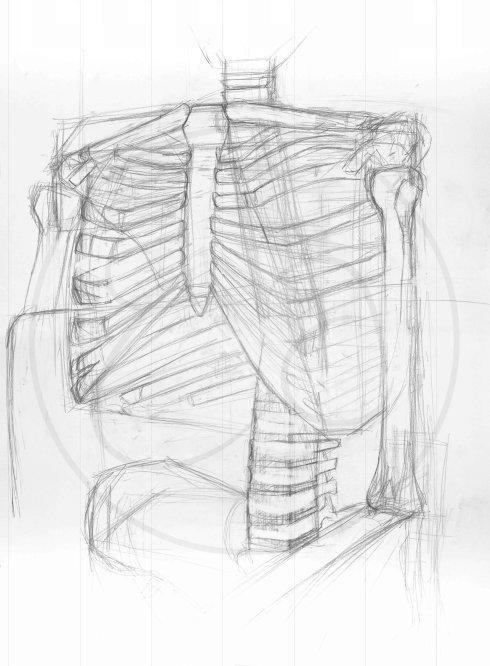 Skeleton Sketch Figure Drawing