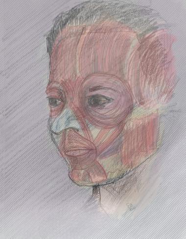 Facial Écorché (Graphite and Autodesk Sketchbook)